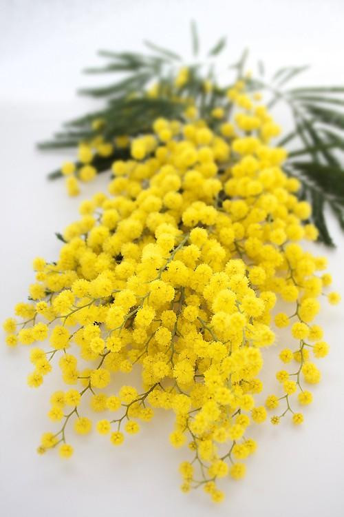 el sofa amarillo mimosas boda (5)