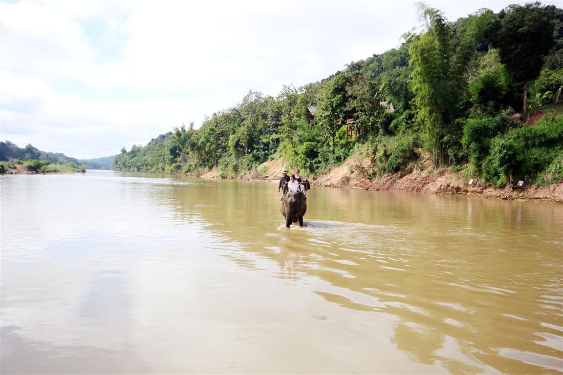 el sofa amarillo montar en elefante en laos (16)
