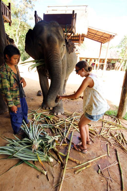el sofa amarillo montar en elefante en laos (19)