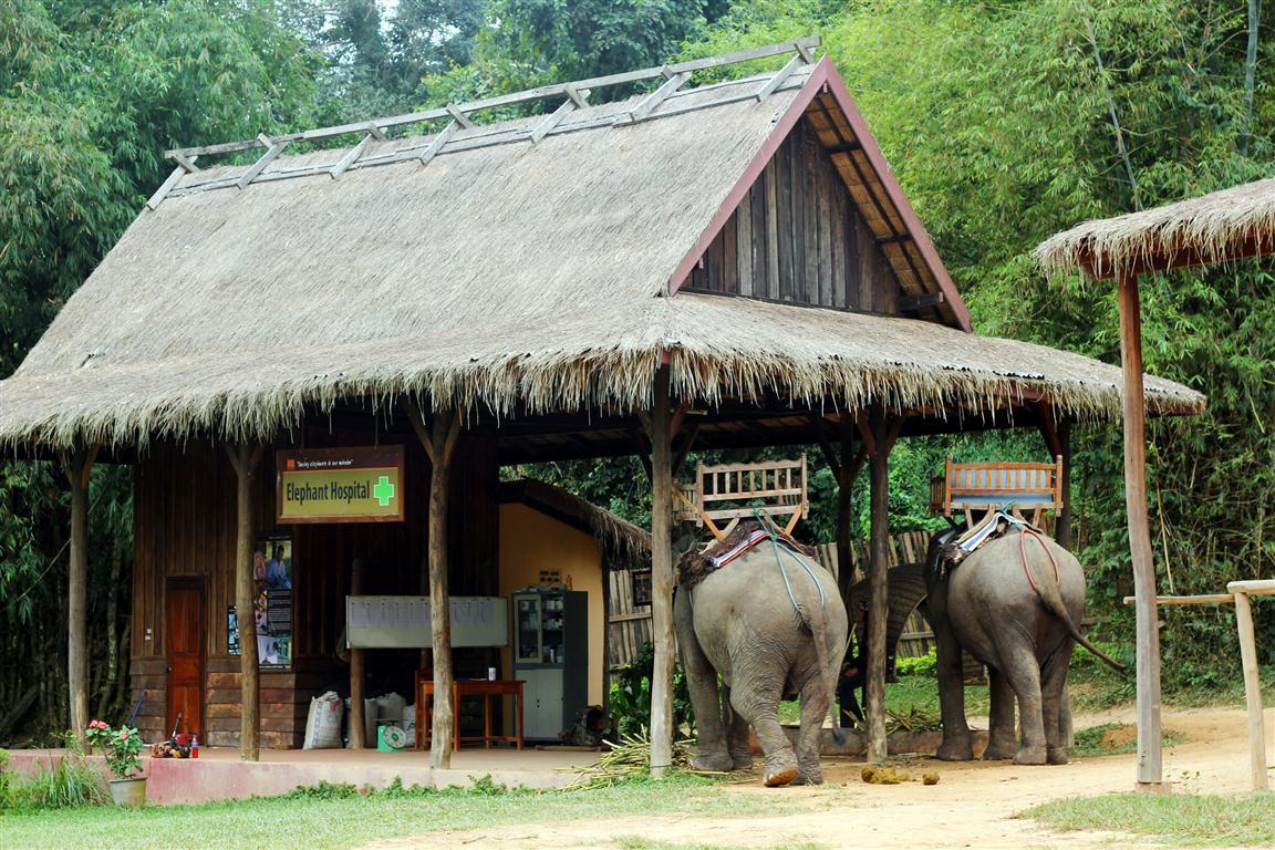 el sofa amarillo montar en elefante en laos (2)