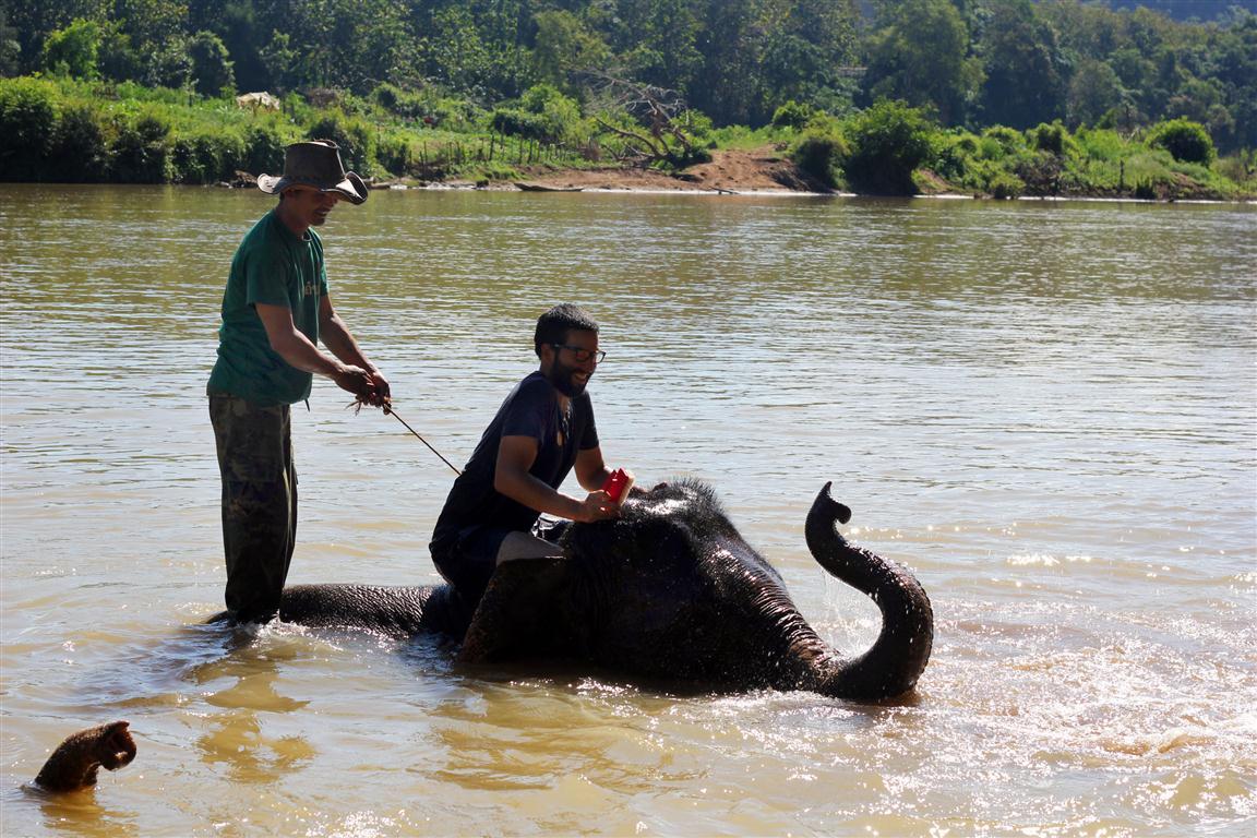 el sofa amarillo montar en elefante en laos (31)