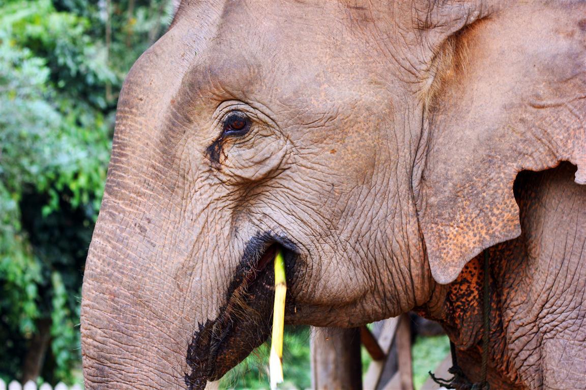 el sofa amarillo montar en elefante en laos (4)