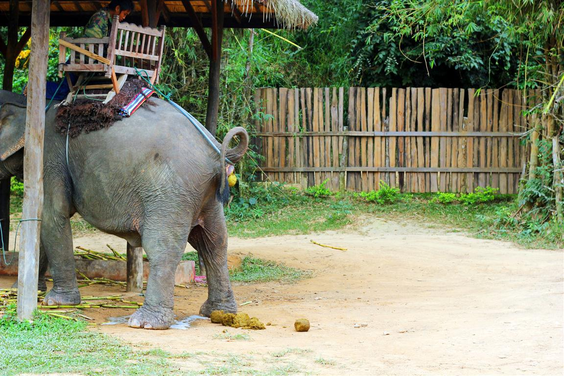 el sofa amarillo montar en elefante en laos (6)