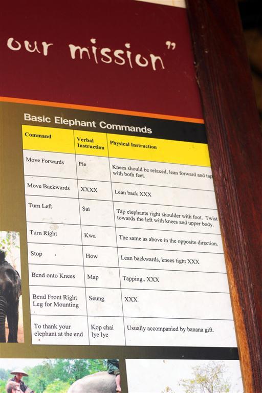 el sofa amarillo montar en elefante en laos (8)