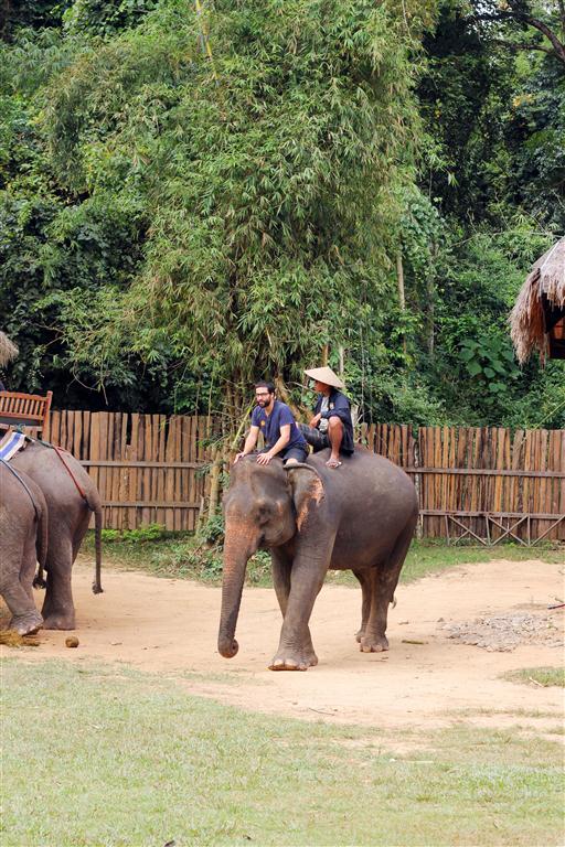 el sofa amarillo montar en elefante en laos (9)