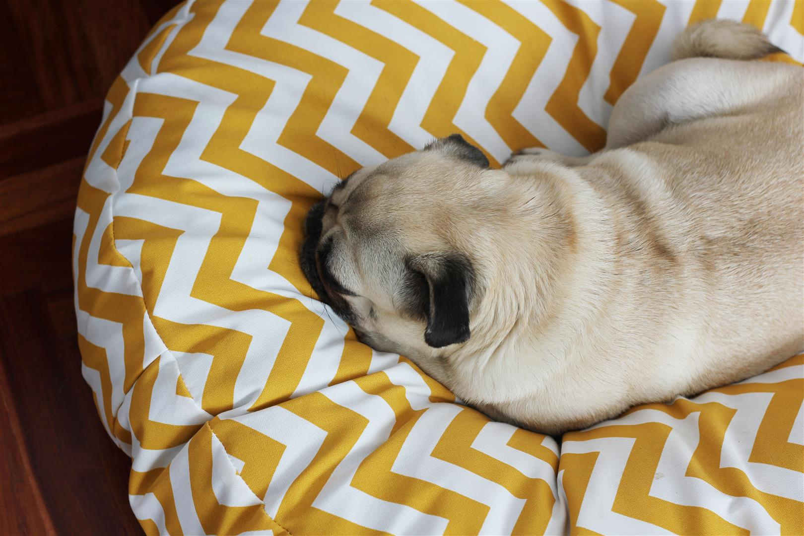 cama-para-perro